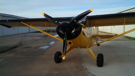 husky-446